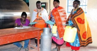 Members of  Kajiado Maasai women dairy  cooperative society  deliver  their millk, the Millk cooler was donated by the county government to Society